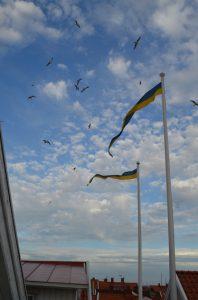 Flag poles and birds
